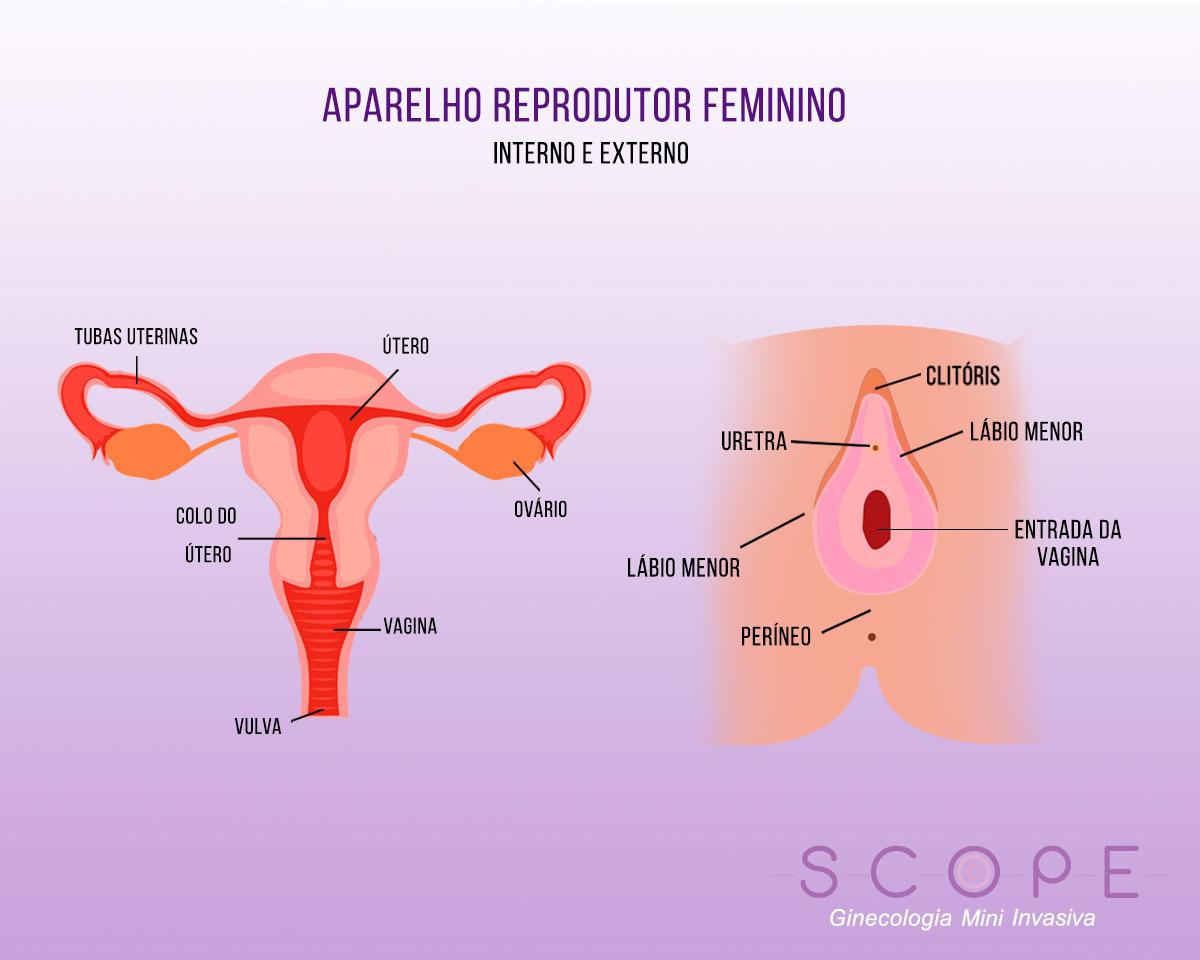 Aparelho reprodutor feminino: conheça o seu